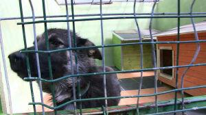 Ukradli pół tony karmy ze schroniska dla zwierząt