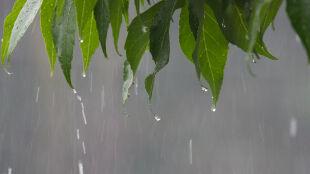 Prognoza pogody na dziś: okresowe opady deszczu, do 20 stopni Celsjusza